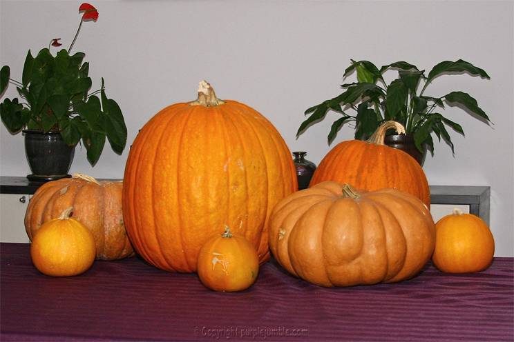 courges halloween