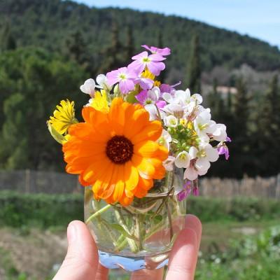 fleurs-jardin-10