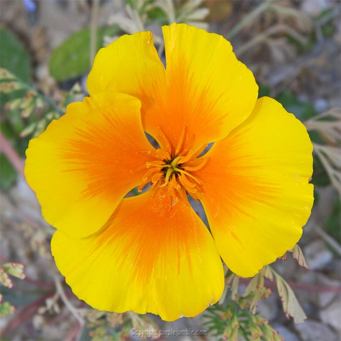 Mes petits tr sors du jardin 1 purple jumble for Guide des fleurs du jardin
