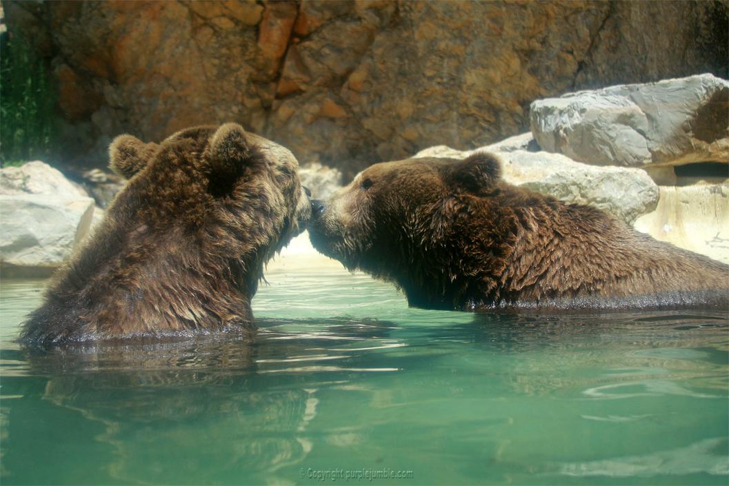 Zoo de la Barben ours