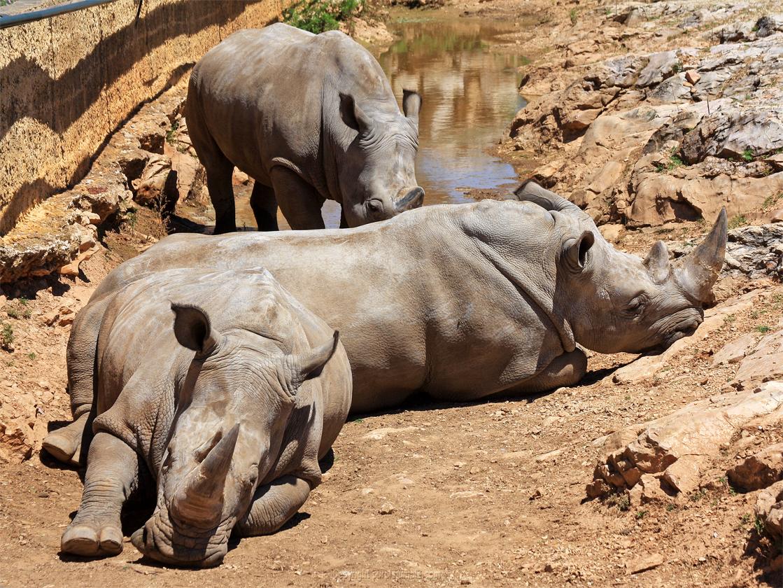 Zoo de la Barben rhinocéros