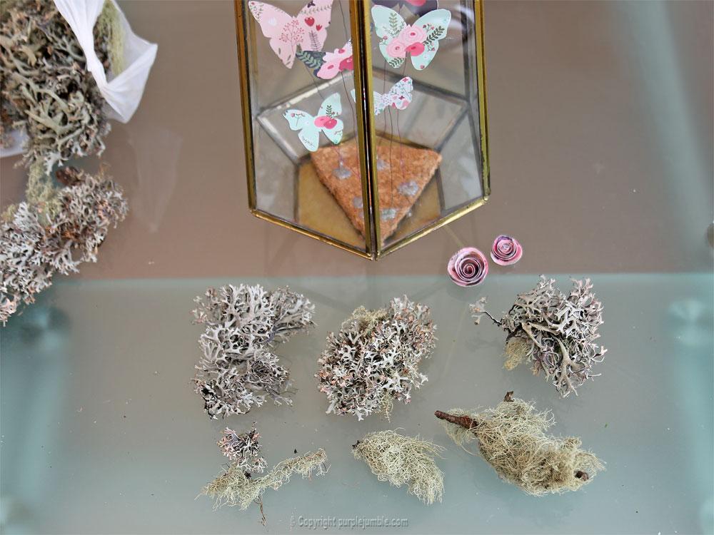 diy papillons papier terrarium mousse