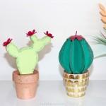 diy cactus carton creavea