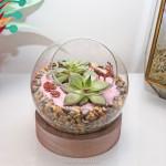 diy terrarium succulentes décoration