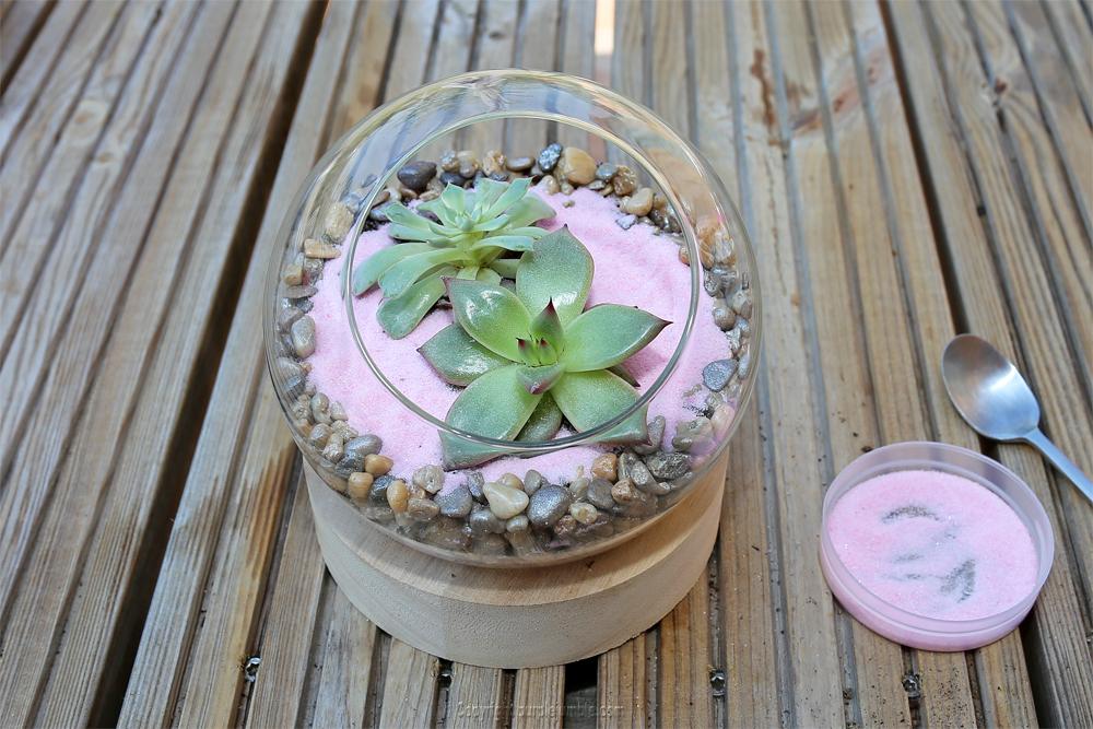 diy terrarium succulentes sable