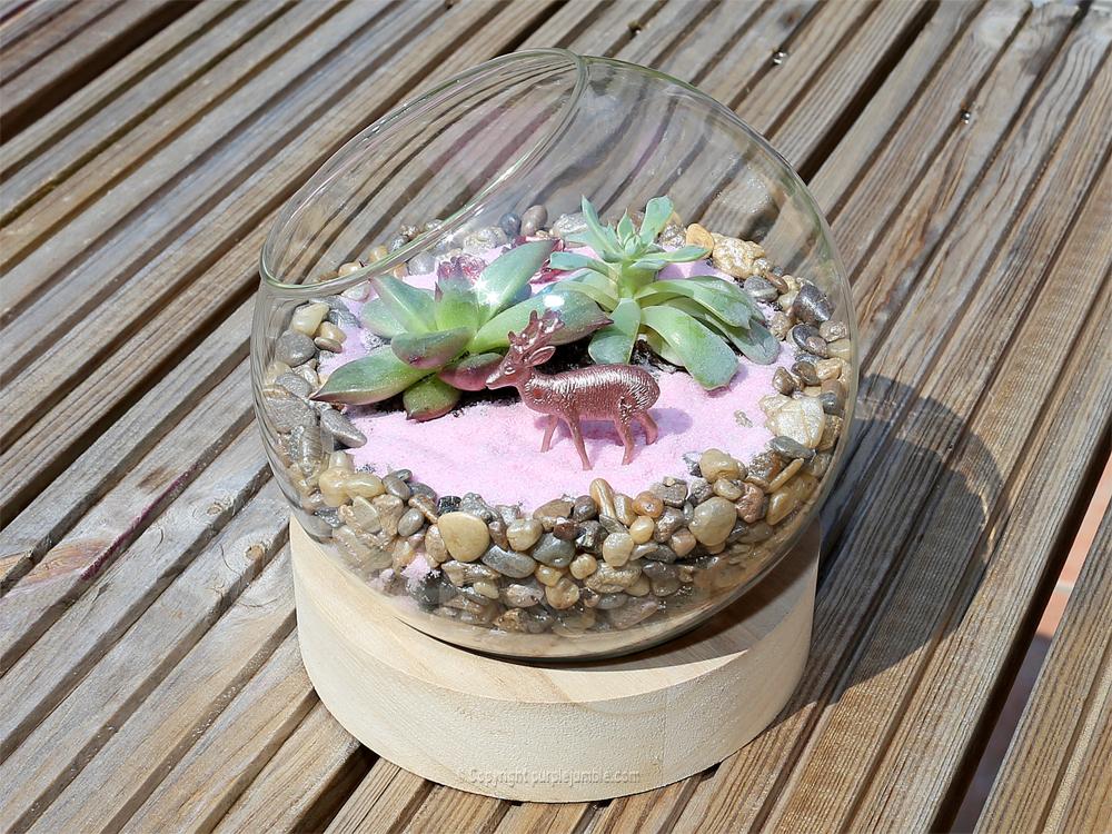 diy terrarium succulentes biche