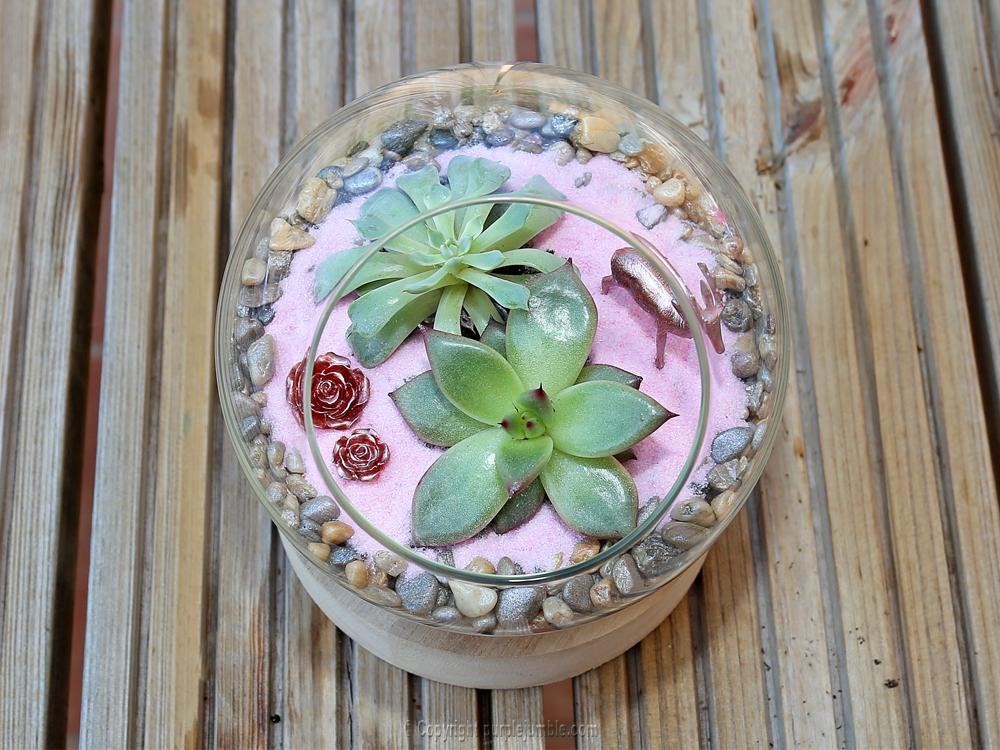 diy terrarium succulentes ornements