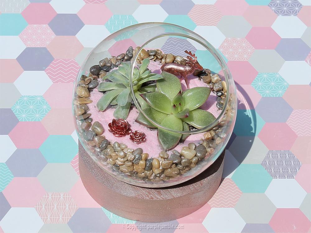 diy terrarium succulentes fini
