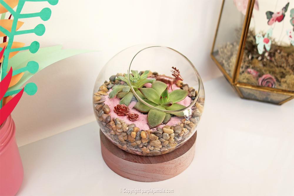 diy terrarium succulentes étagère