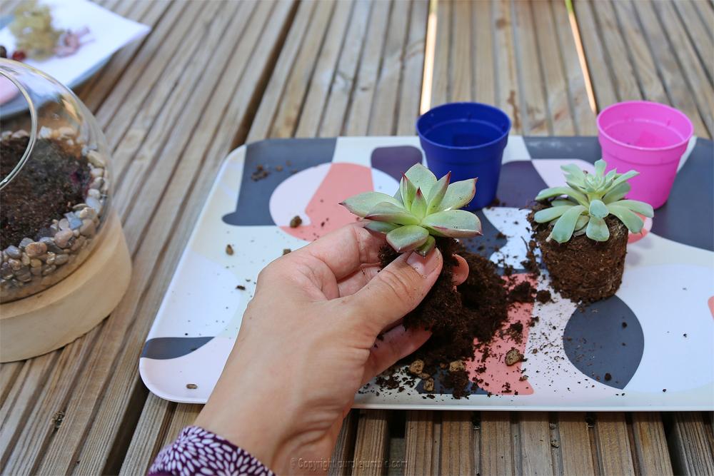 diy terrarium succulentes rempotage