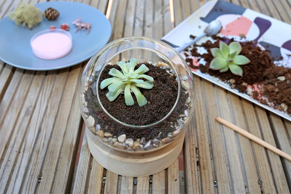 diy terrarium succulentes plantation