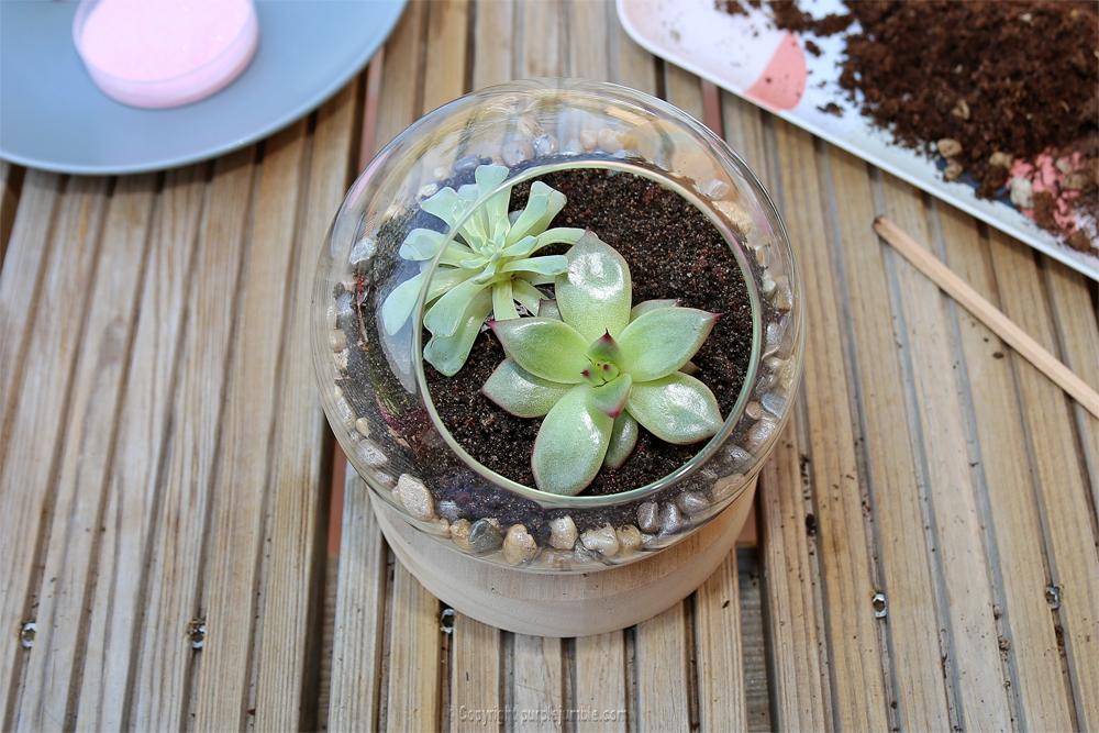 diy terrarium succulentes duo