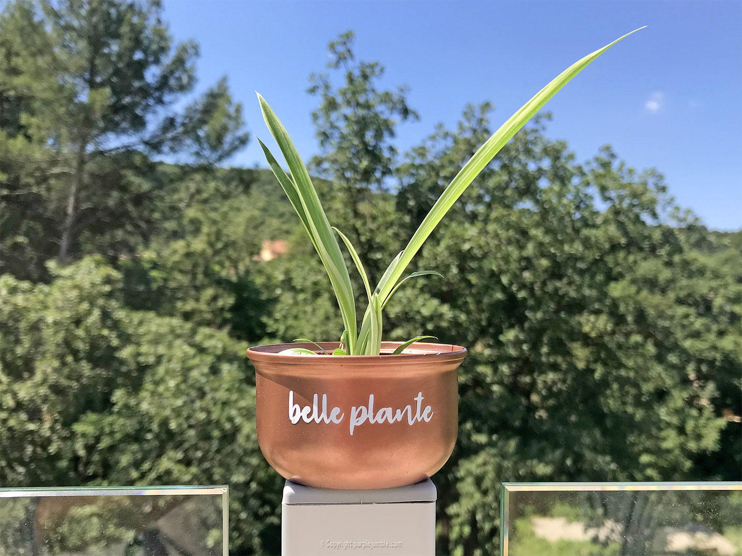 diy pots boutures cricut joy plante
