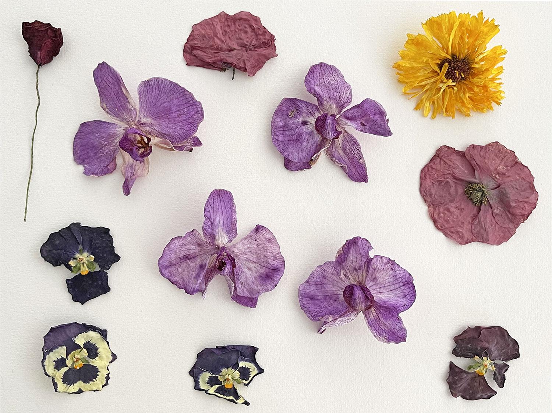 diy cadre fleurs sechees creavea orchidees