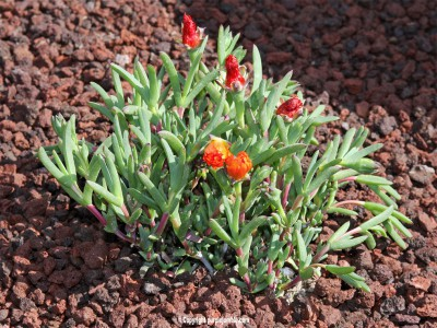 DIY-plantes-grasses-jardin-18